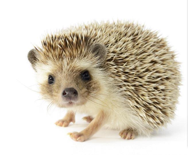 campania adopta un animal 1